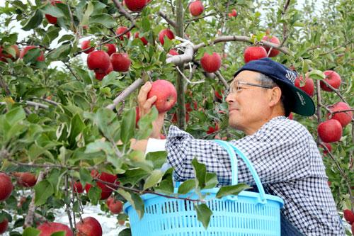 LoveAomori青森完熟りんご100%ジュース「清安(せいあん)」